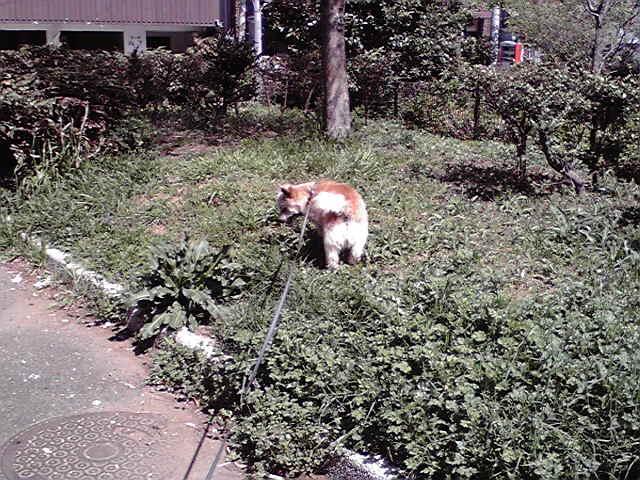 4月13日よいてんき犬
