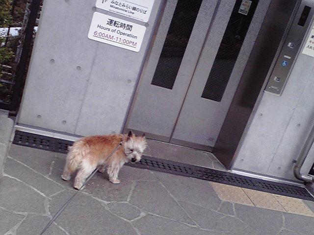 4月15日アメリカ山犬