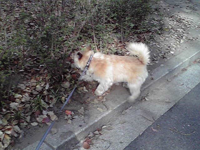 4月17日仁が始まる犬