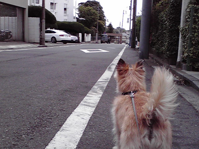 4月21日検査犬