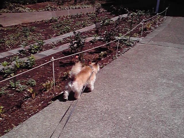 4月24日犬アレルギー犬