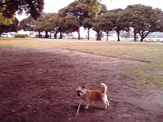 4月25日海犬
