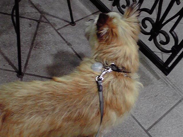 5月2日シミヒロ犬