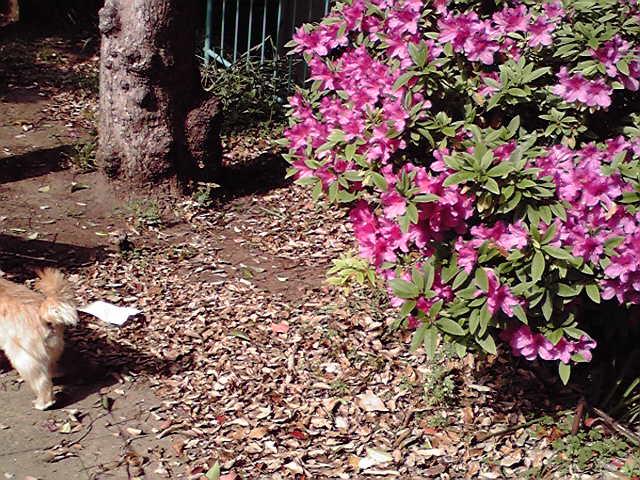 5月4日千代崎公園犬