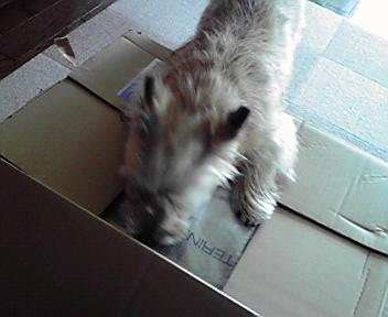 5月6日ごはん届いた犬