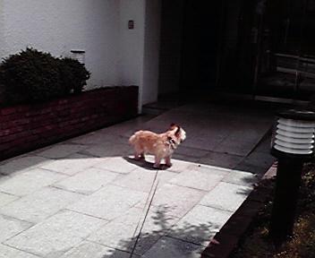 5月9日初夏犬