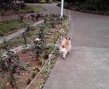 5月10日丘公園犬