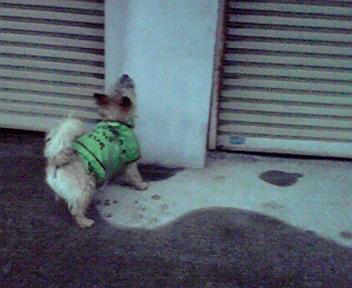 5月11日雨降り犬