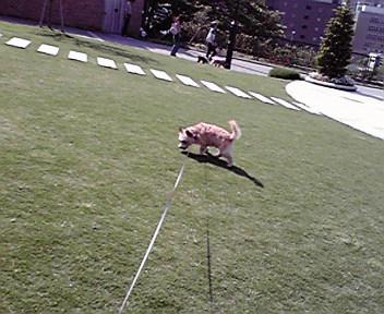 5月14日夏犬