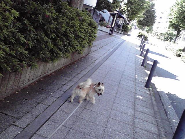5月19日買い物犬