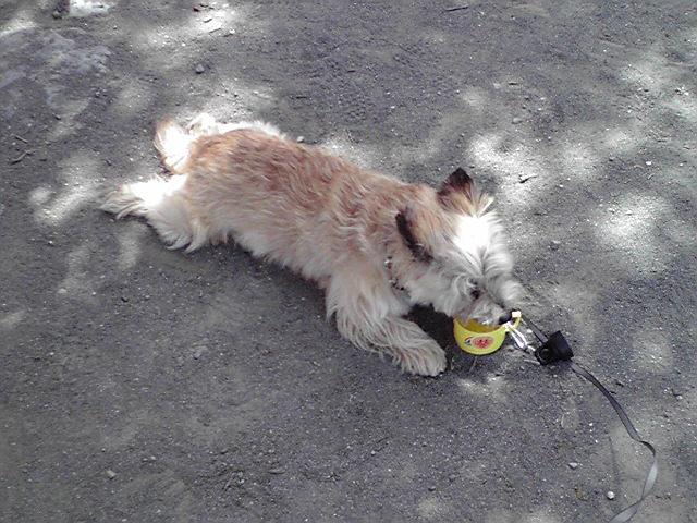 5月21日暑い犬