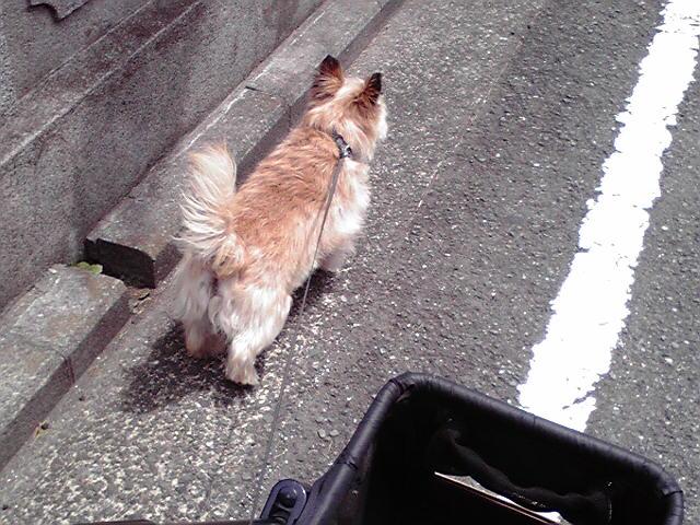 5月22日今日も暑い犬