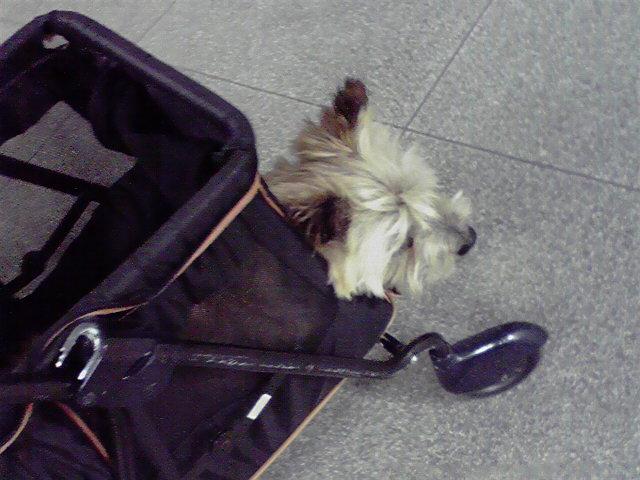 5月31日梅雨犬