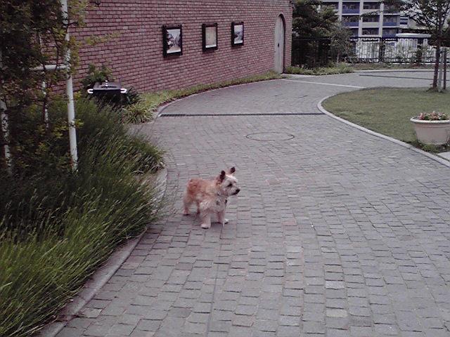 6月1日ハンスト犬