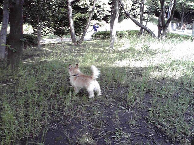 6月4日夏の犬