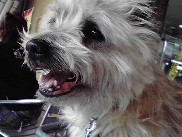 6月9日PARCO<br />  犬