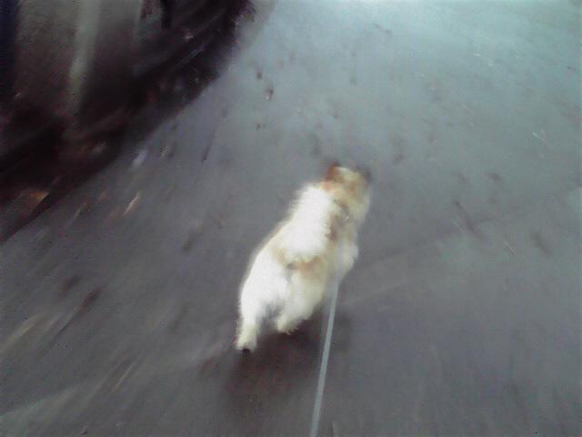6月11日雨上がりの犬