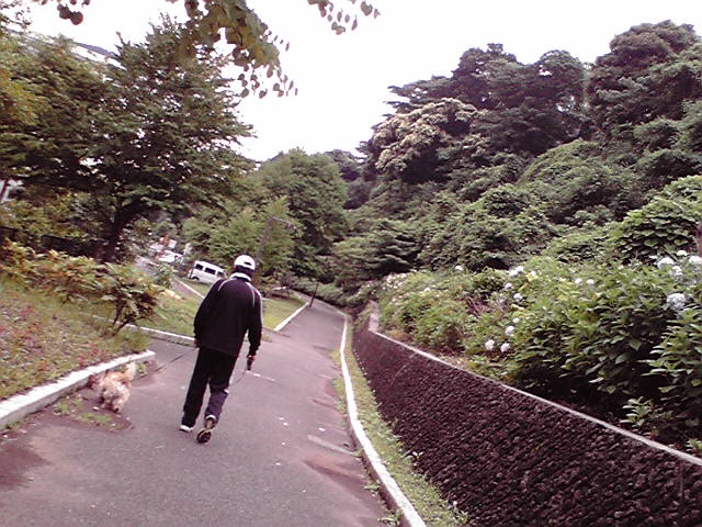 6月19日梅雨犬
