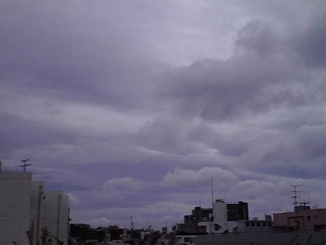 6月20日雨犬