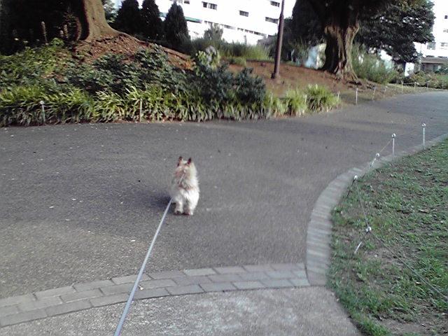 6月29日帰って来た犬