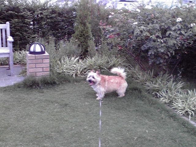 7月4日風が強い犬