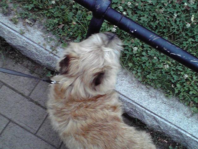 7月8日コクリコ犬