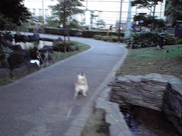 7月9日買い物犬