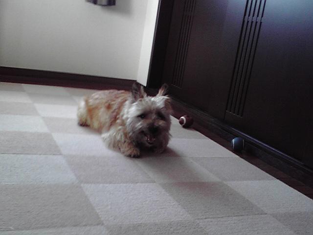 7月11日昼下がりの犬