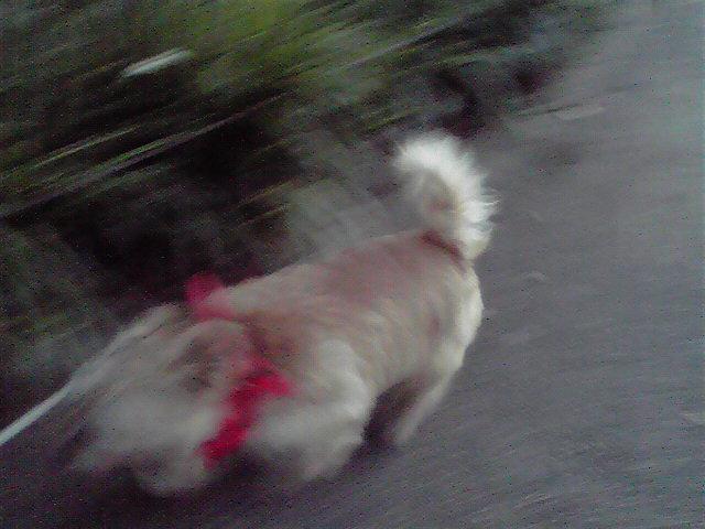 7月15日夕刻犬