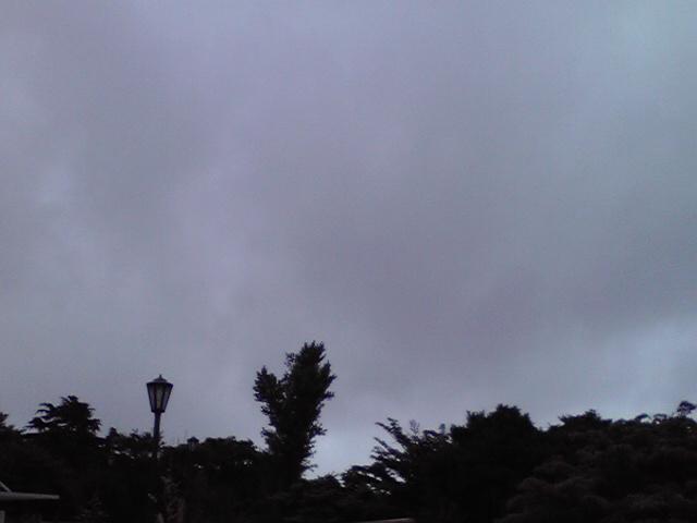 7月19日台風犬