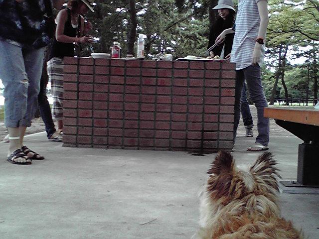 7月27日バーベキュー犬