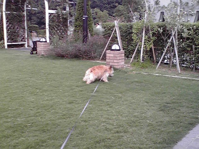 7月28日水筒犬