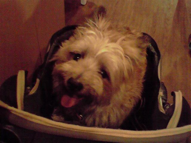 7月31日さようなら犬茶屋さん犬