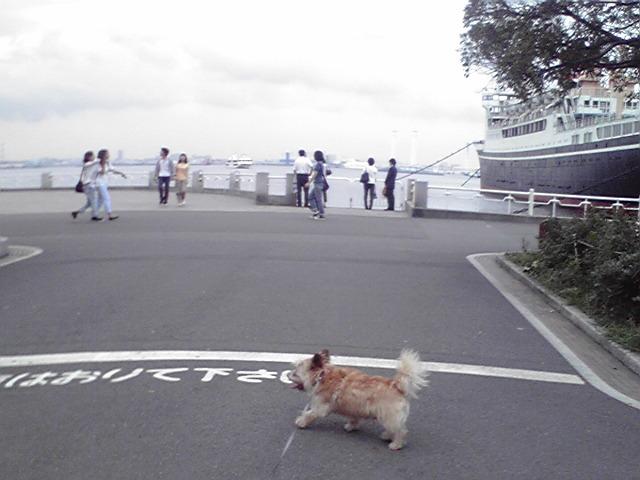 8月3日モモちゃん犬