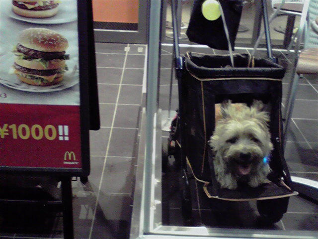 8月5日夕飯犬