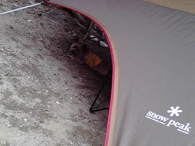 8月7日キャンプ犬