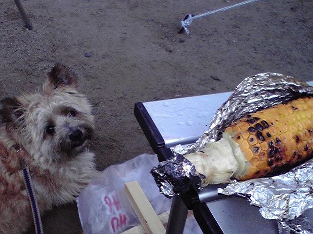 8月9日キャンプ2日目犬