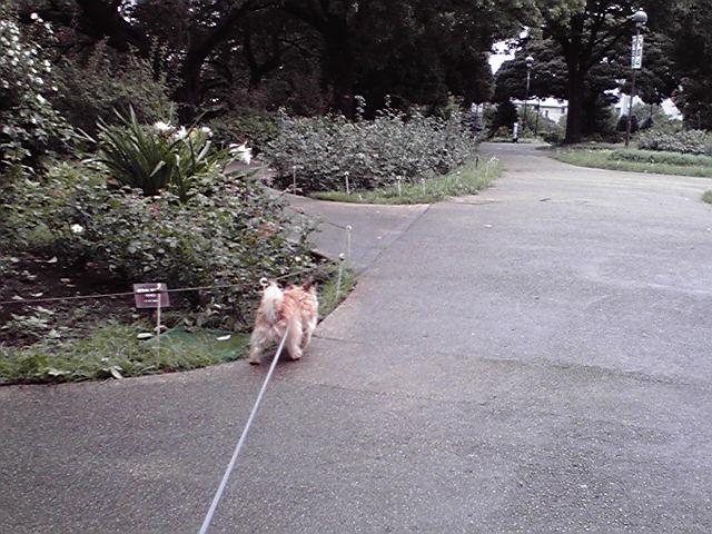 8月22日寒い犬