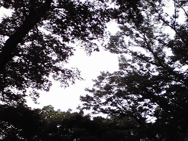 8月25日雨上がりの逆モヒ犬