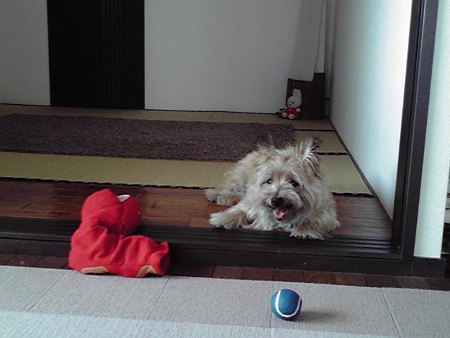 8月29日考える犬