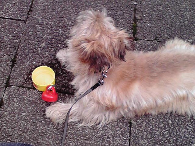 8月31日台風犬
