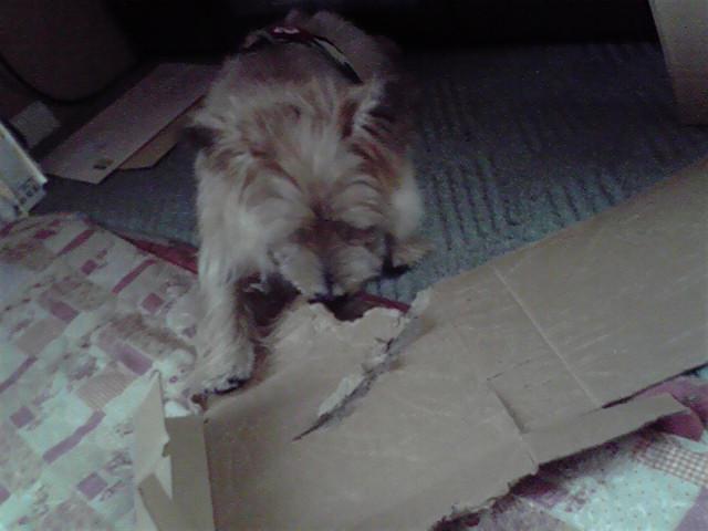 9月11日夏休みの思い出犬