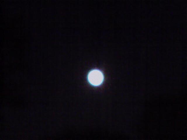 9月12日お月見犬