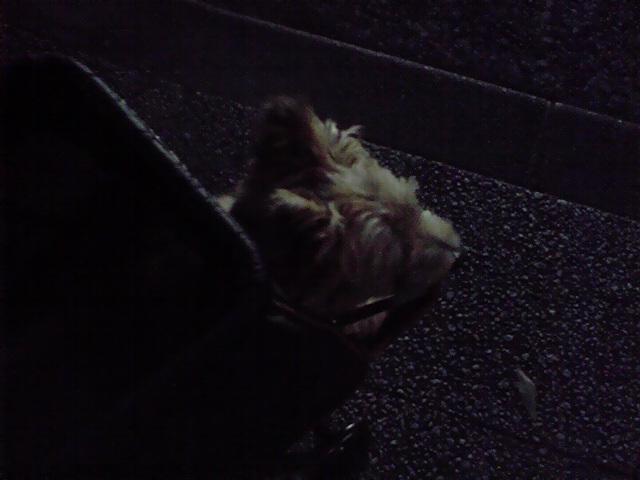 9月15日驚く犬