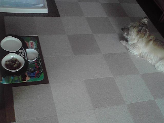 9月16日食わず嫌い犬