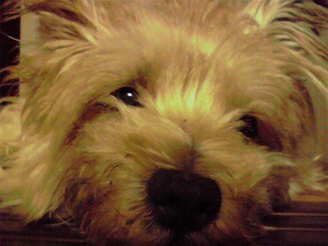 9月18日クリスマス犬