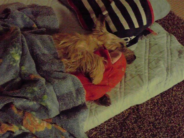 9月25日寝てる犬
