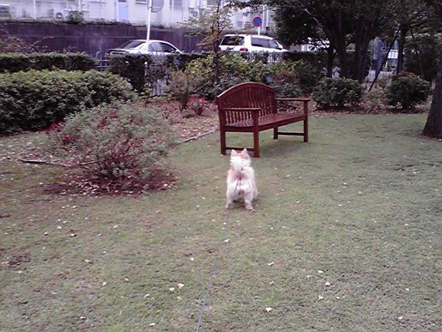10月2日秋の犬