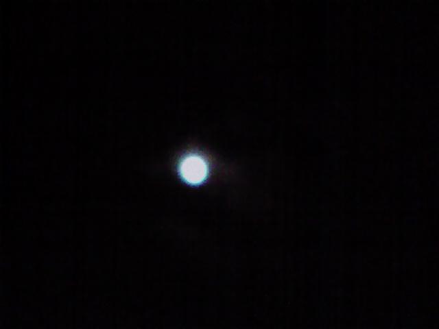 10月10日お月見犬