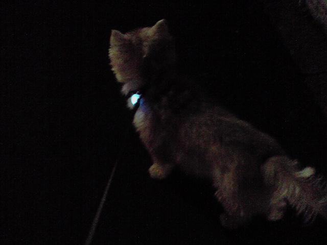 10月12日満月犬